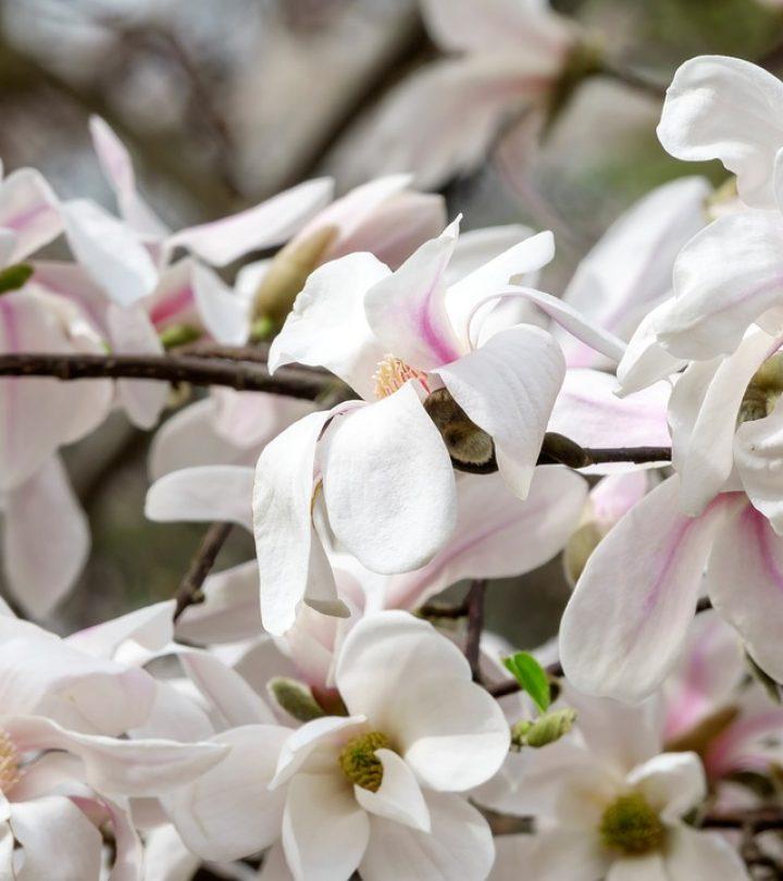 Blume-2